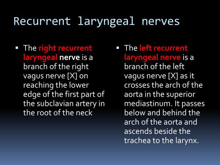 Recurrent laryngeal nerves