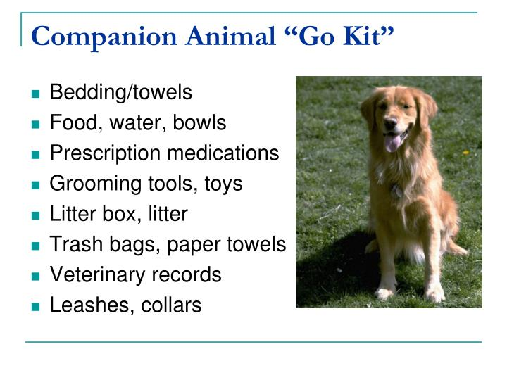 "Companion Animal ""Go Kit"""