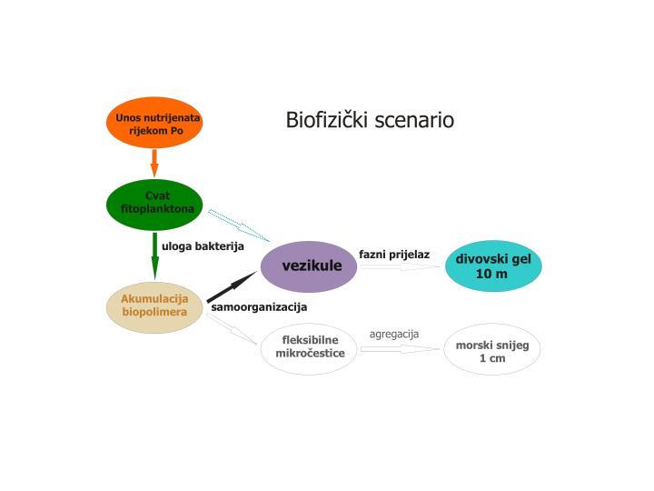 Biofizički scenario