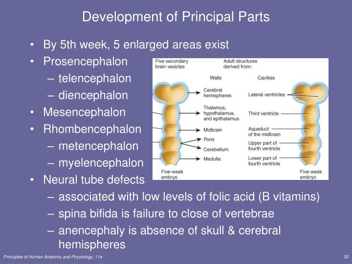 Development of Principal Parts