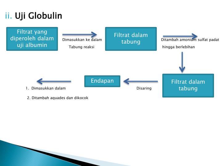 Filtrat yang diperoleh dalam uji albumin