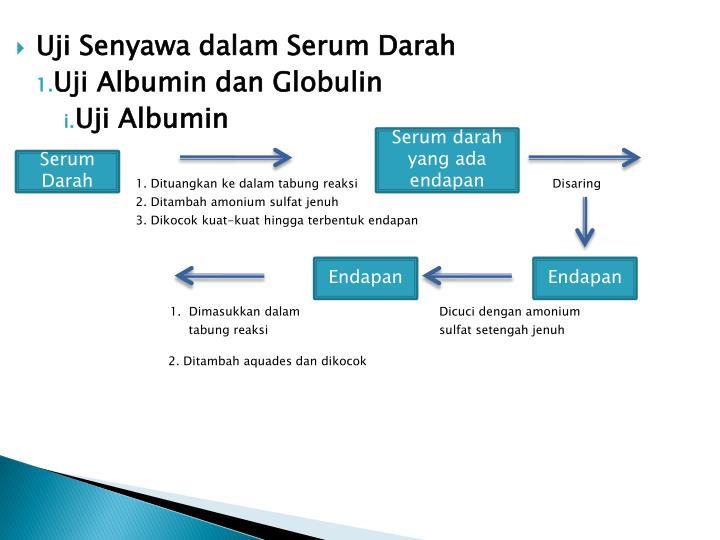 Uji Senyawa dalam Serum Darah