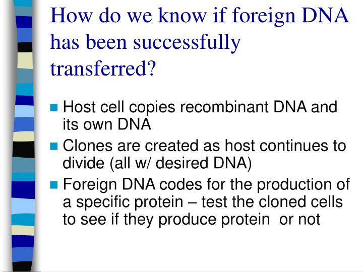 How do we know if foreign DNA has been successfully transferred?