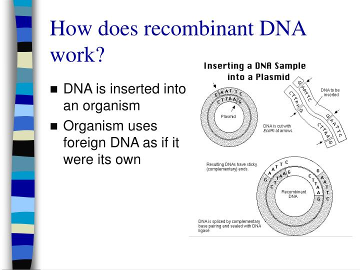 How does recombinant DNA work?