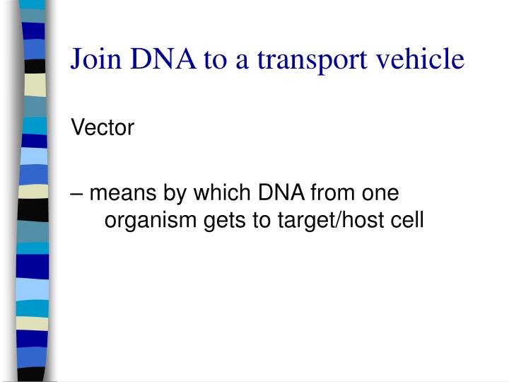 Join DNA to a transport vehicle