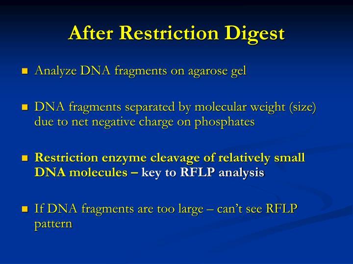 After Restriction Digest