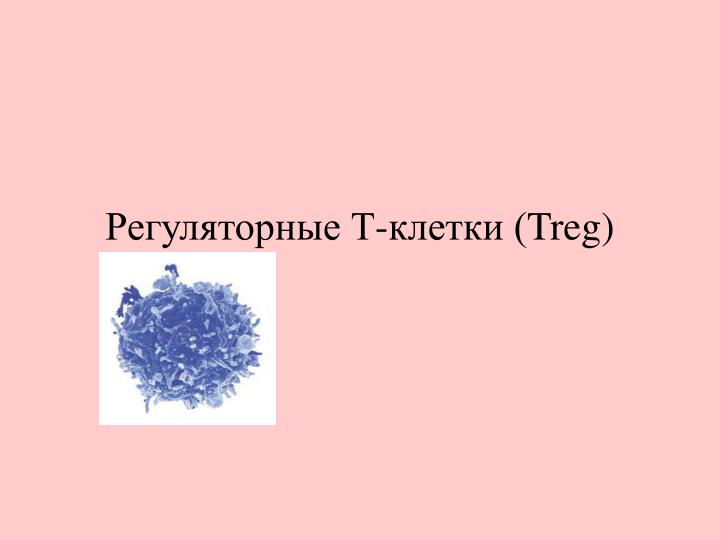 Регуляторные Т-клетки (