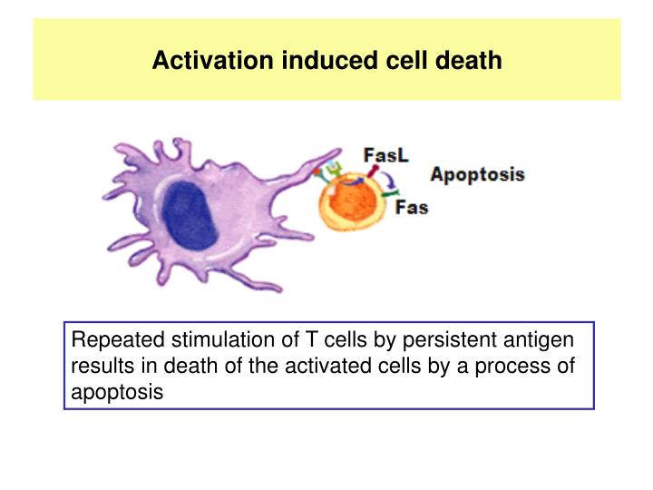 Activation induced cell death