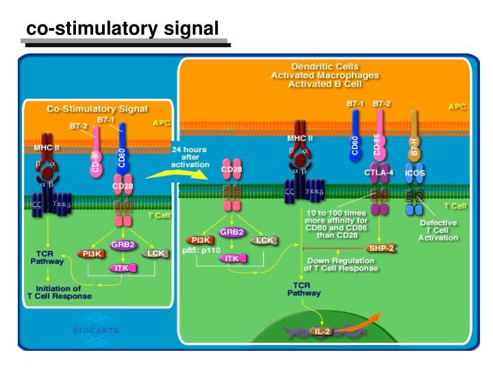 co-stimulatory signal