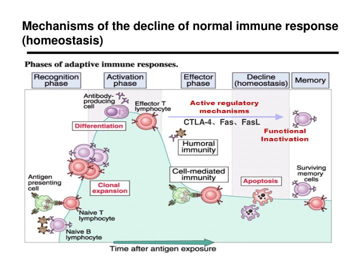 Mechanisms of the decline of normal immune response (homeostasis)