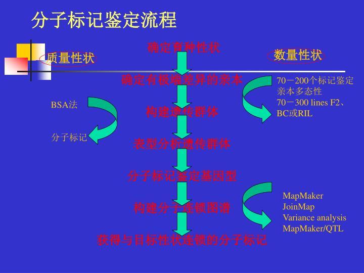 分子标记鉴定流程