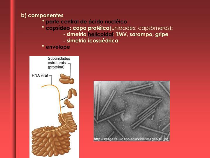 b) componentes