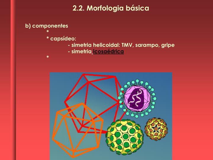 2.2. Morfologia básica