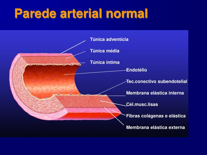 Parede arterial normal