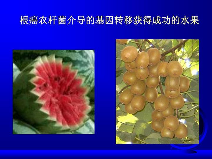 根癌农杆菌介导的基因转移获得成功的水果