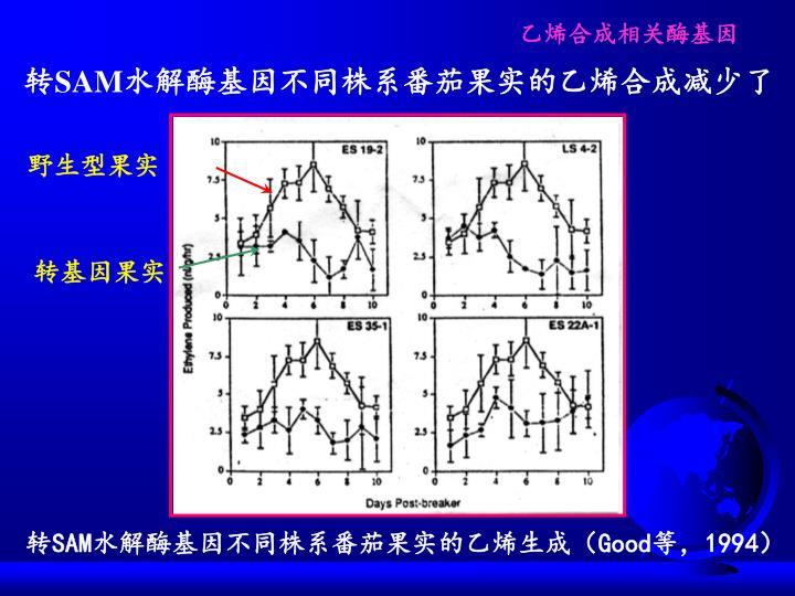 乙烯合成相关酶基因