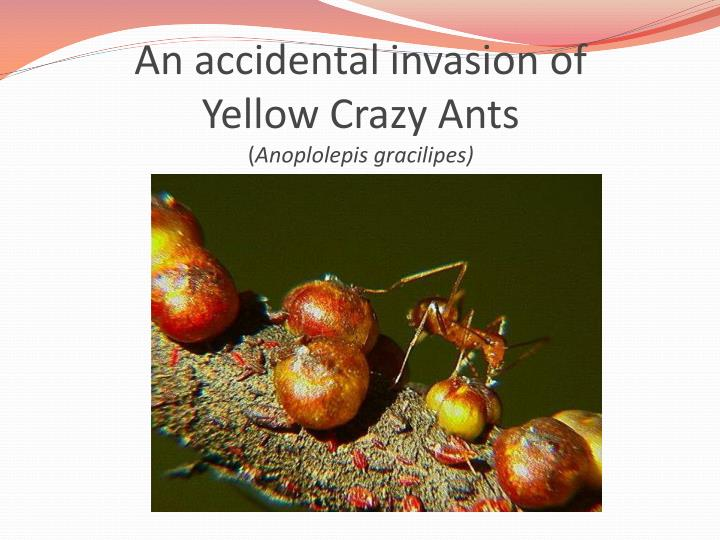 An accidental invasion of
