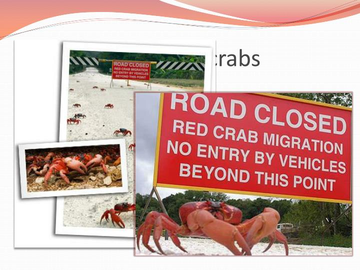 Protecting the red crabs