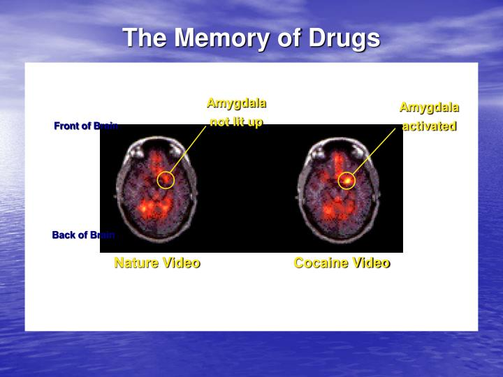 The Memory of Drugs