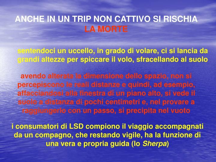 ANCHE IN UN TRIP NON CATTIVO SI RISCHIA