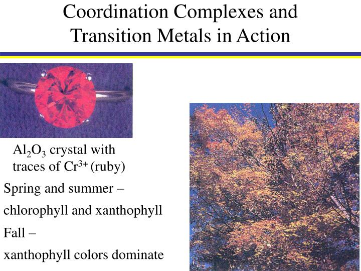 Coordination complexes and transition metals in action