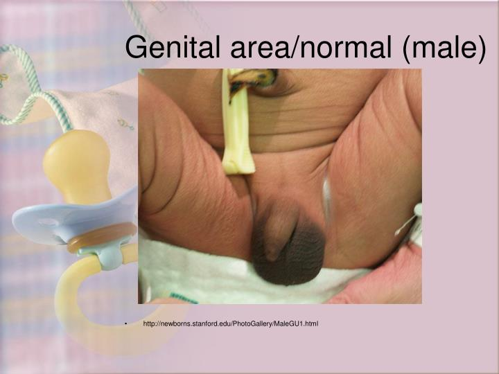 Genital area/normal (male)