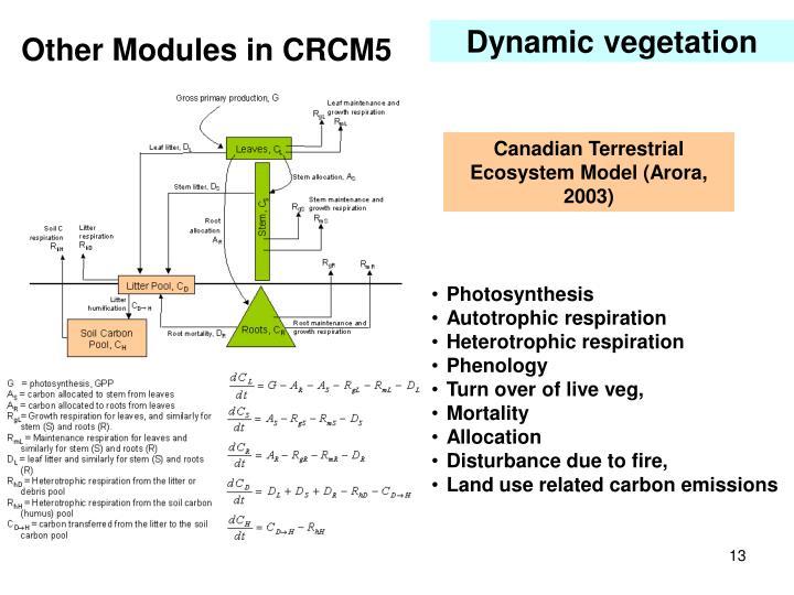 Dynamic vegetation