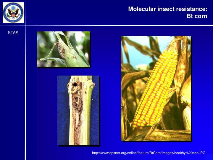 Molecular insect resistance: