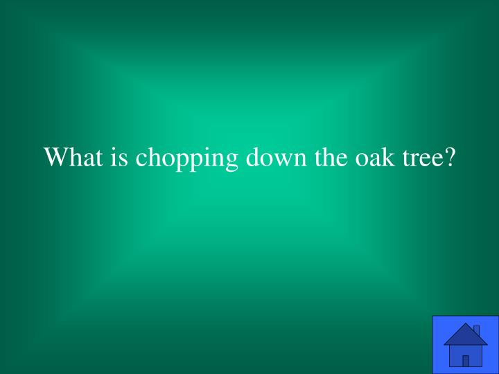 What is chopping down the oak tree?