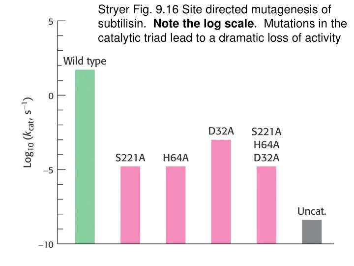 Stryer Fig. 9.16 Site directed mutagenesis of