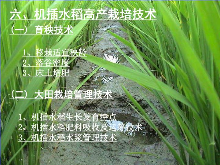 六、机插水稻高产栽培技术