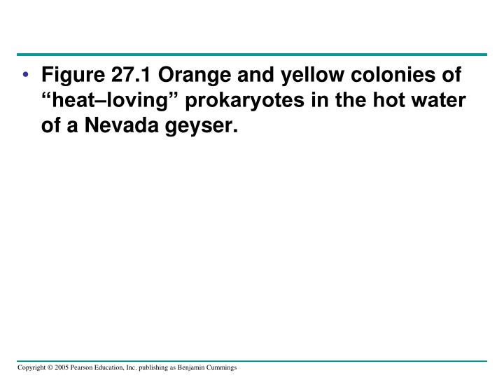 "Figure 27.1 Orange and yellow colonies of ""heat–loving"" prokaryotes in the hot water of a Nevada geyser."