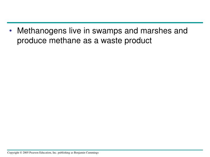 Methanogens live in swamps and marshes and produce methane as a waste product