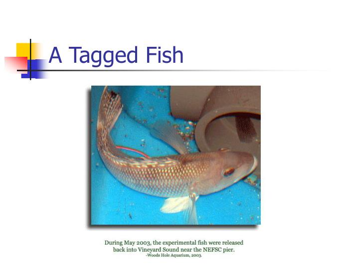 A Tagged Fish