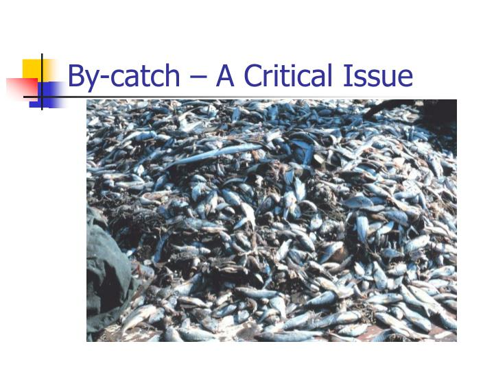 By-catch – A Critical Issue