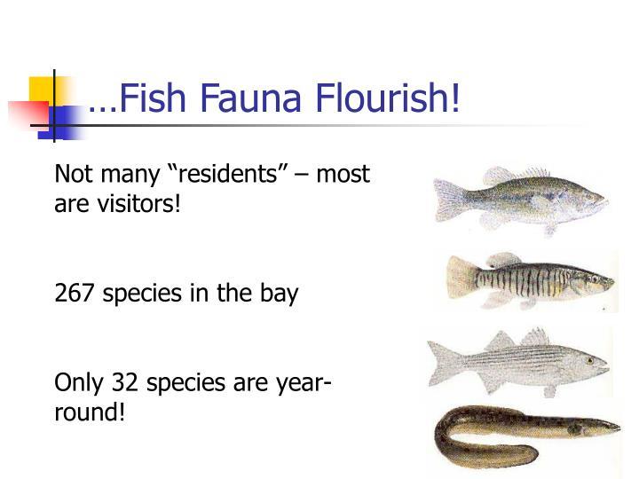 …Fish Fauna Flourish!