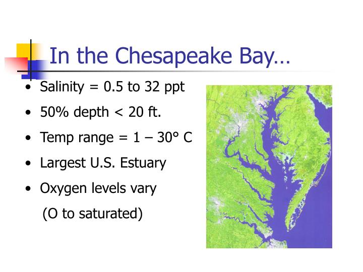 In the Chesapeake Bay…