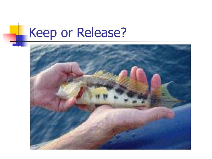 Keep or Release?