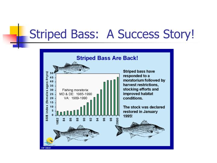 Striped Bass:  A Success Story!