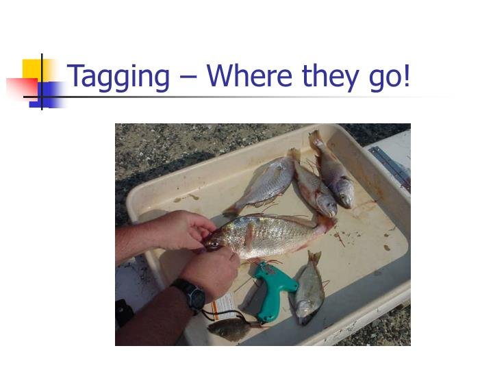 Tagging – Where they go!