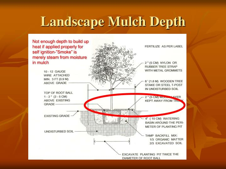 Landscape Mulch Depth