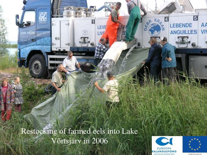 Restocking of farmed eels into Lake