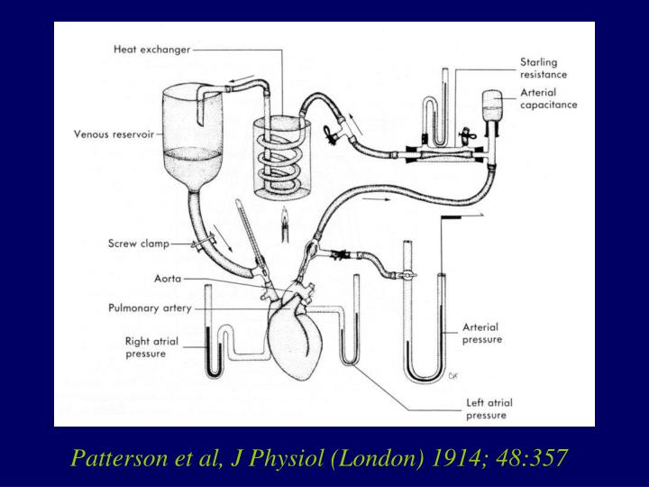 Patterson et al, J Physiol (London) 1914; 48:357