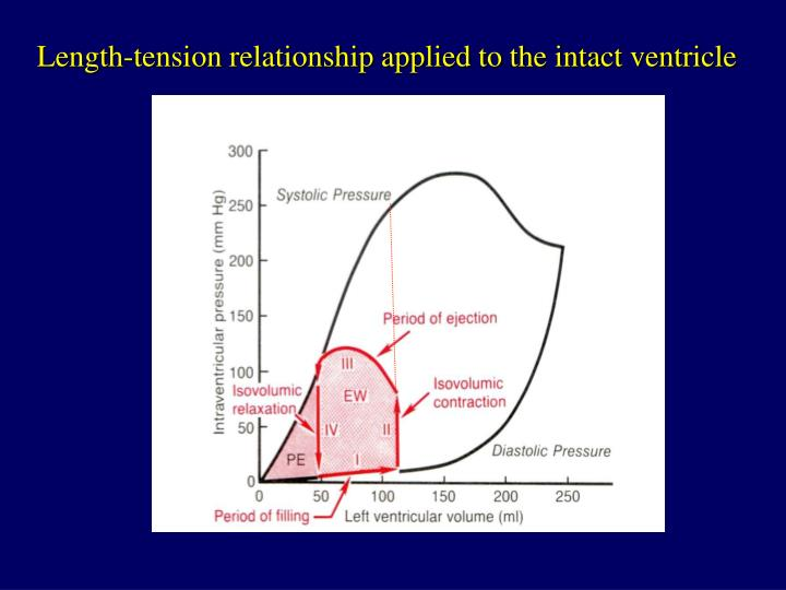 Length-tension relationship applied to the intact ventricle