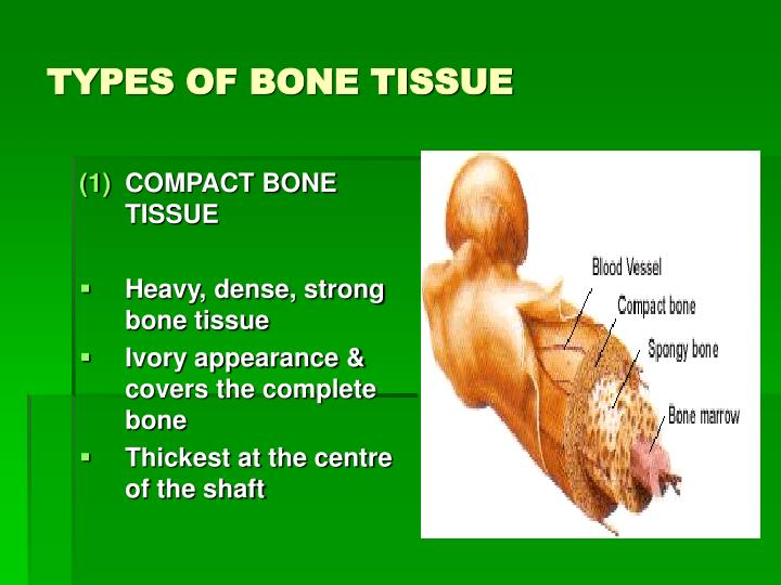 TYPES OF BONE TISSUE