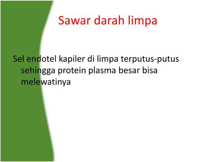 Sawar darah limpa
