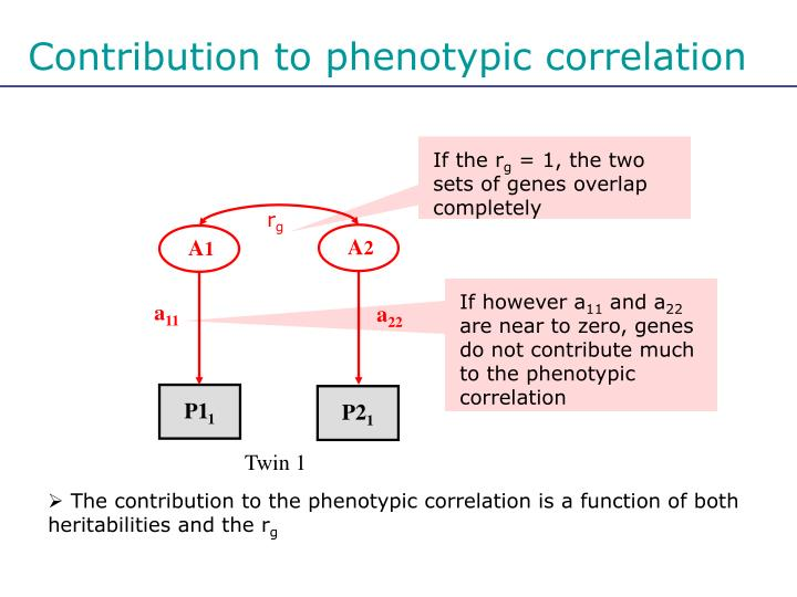 Contribution to phenotypic correlation