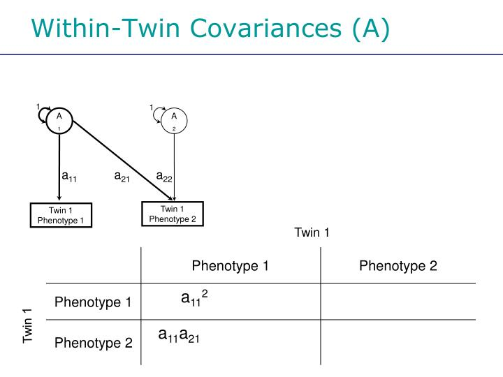 Within-Twin Covariances (A)