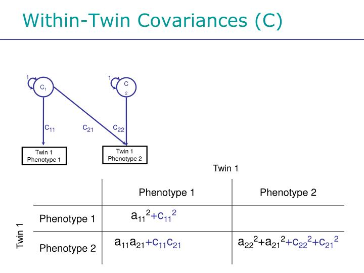 Within-Twin Covariances (C)