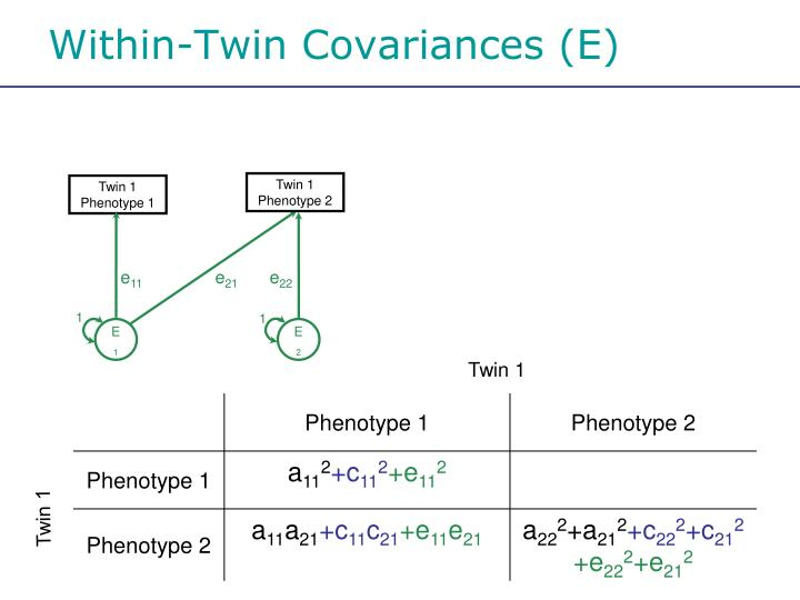 Within-Twin Covariances (E)